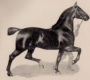 A German Coach Horse shown by McLaughlin Bros